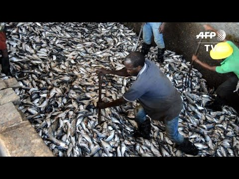 As Angola looks beyond oil, fish offers a new income