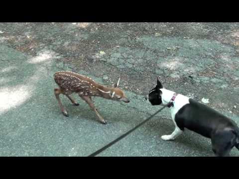 Brooke & Bambi
