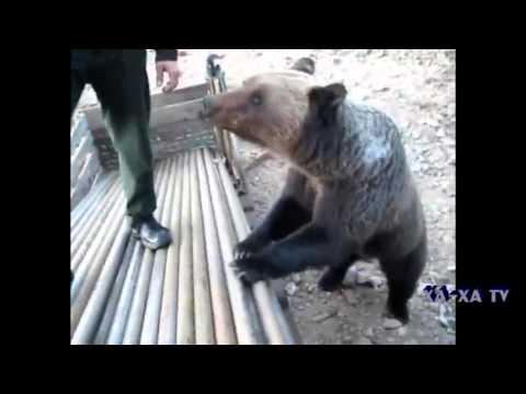 13 медведей, марихуана и 38 дублей - YouTube