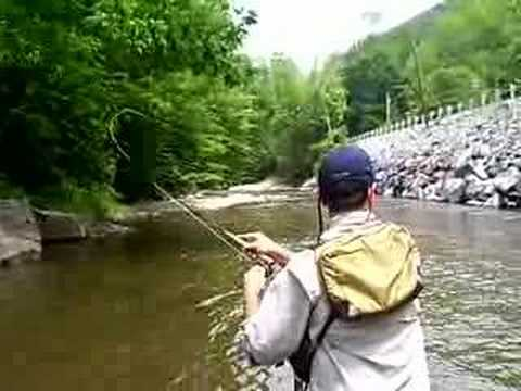 Fly fishing west virginia wild rainbow trout youtube for Fly fishing west virginia
