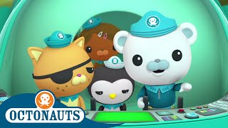 Octonauts - Kwazii Searches for Treasure   Cartoons for Kids   Underwater Sea Education