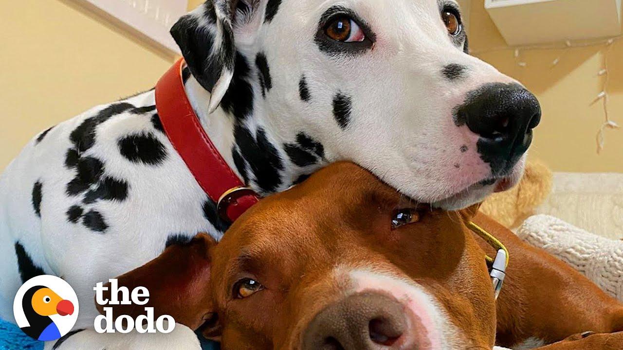 Dog BFFs Get Their Parents To Start Dating | The Dodo