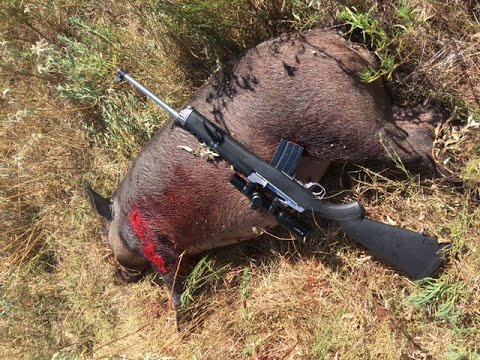 Texas Hog Hunting 2