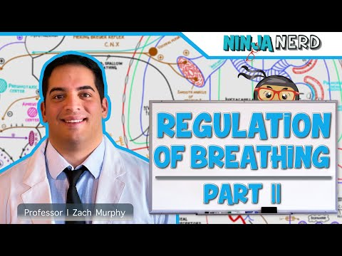 Respiratory: Regulation of Breathing Part 2: Central & Peripheral Chemoreceptors