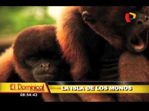 La Isla de los Monos: refugio en la Amazonía lucha contra tráfico de ...