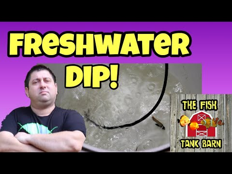 Freshwater Dip - How To