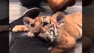 funny animals compilation 2015 2016 try not to laugh or grin bonus funny animals and mirrors