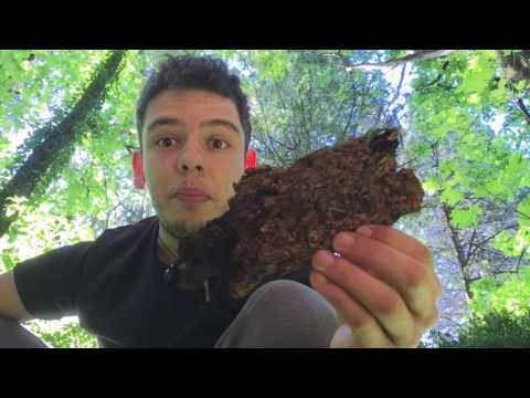 Intro to wild foods: Organic vs wild greens and the benefits
