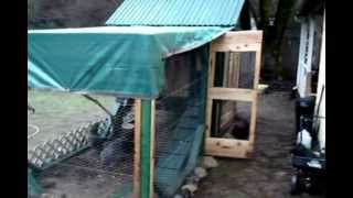 Raising Chickens~ Diy Chicken Coop And Run .wmv