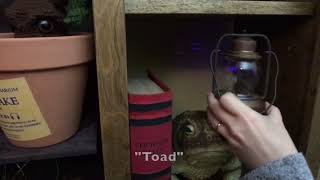 DIY Harry Potter Escape Room