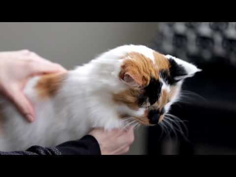 Cat DNA Test by Basepaws | We made a deal on Shark Tank show!