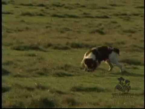Uruguay Bird Hunting - Perdiz - Los Gauchos Outfitters - Chris Dorsey - Steve Smith - Upland Hunting