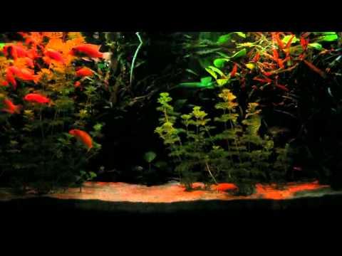 selbst gebaute aquarien led beleuchtung mit sonnenauf und untergangssimulation sowie mondlicht. Black Bedroom Furniture Sets. Home Design Ideas