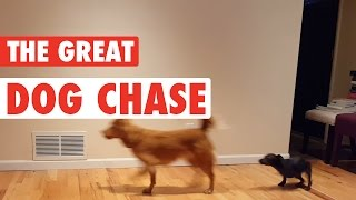 The Great Dog Chase! || Hilarious Dog Chase