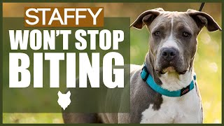 How To Stop Your STAFFORDSHIRE BULL TERRIER BITING