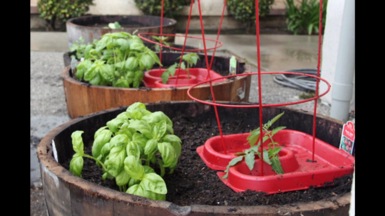 Apartment vegetable garden ideas - YouTube