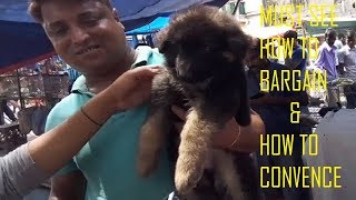Double Coat Heavy Bone 45 Days German Shepherd Puppy Just For Rs 22000 At Galiff Street Pet Market