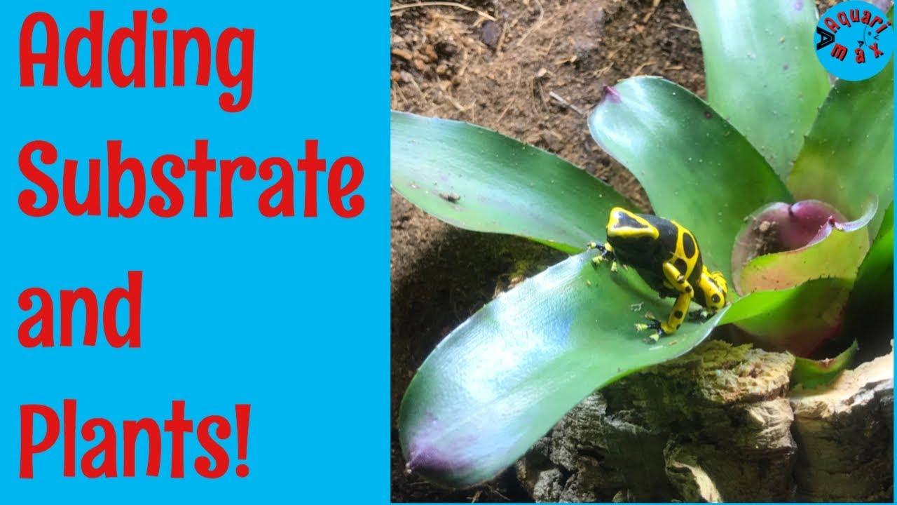 Dart Frog Vivarium Build Adding Substrate And Plants Youtube