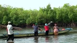 تربية المحار في السنغال | العولمة 3000