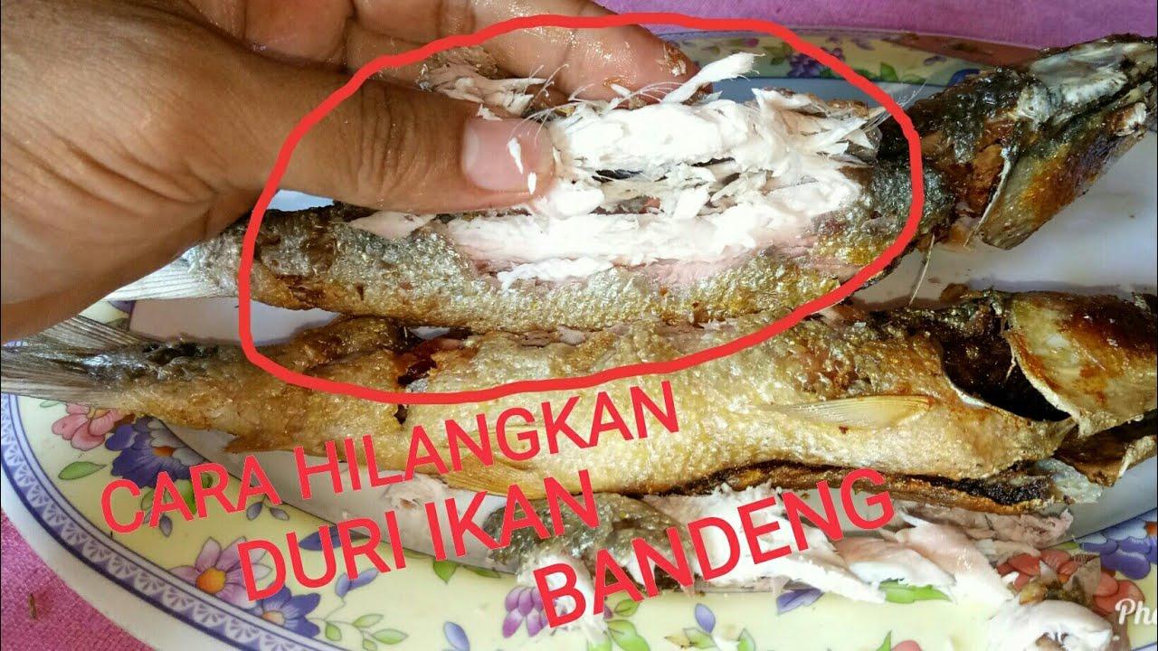 Cara Mengolah Ikan Bandeng Tanpa Duri