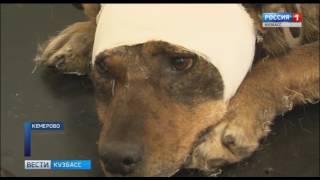 В Кемерове собирают деньги на помощь собаке, пострадавшей от рук живодёров