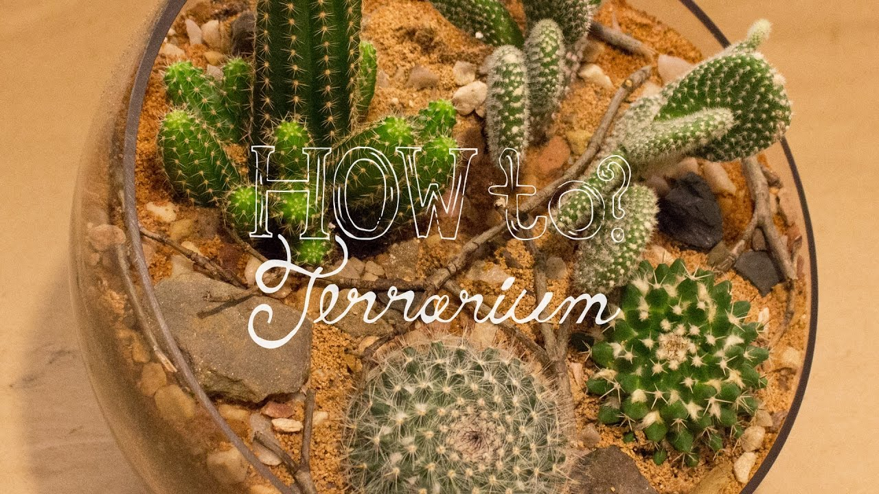 Make A Cactus Terrarium How To Terrarium Ep 4