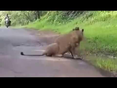 Whatsapp Funny Videos Part 75