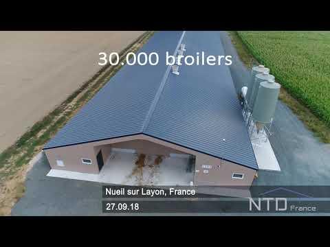 Broilers France 2018 - NTD France