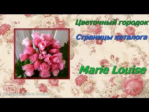 Marie Louise - тюльпановидная пеларгония. Цветочный городок