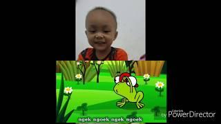 Lagu Anak - Anak Indonesia - Ada kodok Rekotok Rekotok ( REACTION) - DUNIA ANAK