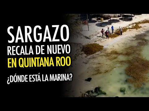 Playa del Carmen recibe el primer recale fuerte de sargazo
