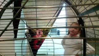 Говорящий попугай Аро в зоопарке.