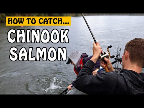 HOW TO CATCH BIG CHINOOK SALMON? Somass River Salmon Fishing Strategy Explained | Fishing With Rod