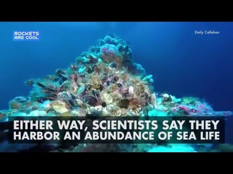 Offshore Oil Rigs Hold Amazing Marine Life