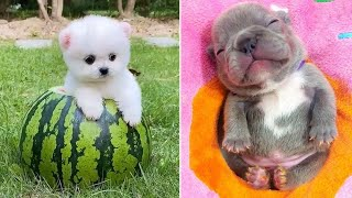 Baby Dogs 🔴 Cute and Funny Dog Videos Compilation #4 | 30 Minutes of Funny Puppy Videos 2021