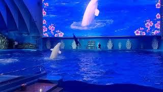 приморский океанариум водное шоу 21.03.2019г