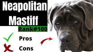 Neapolitan Mastiff Pros and Cons | The Good AND The Bad!