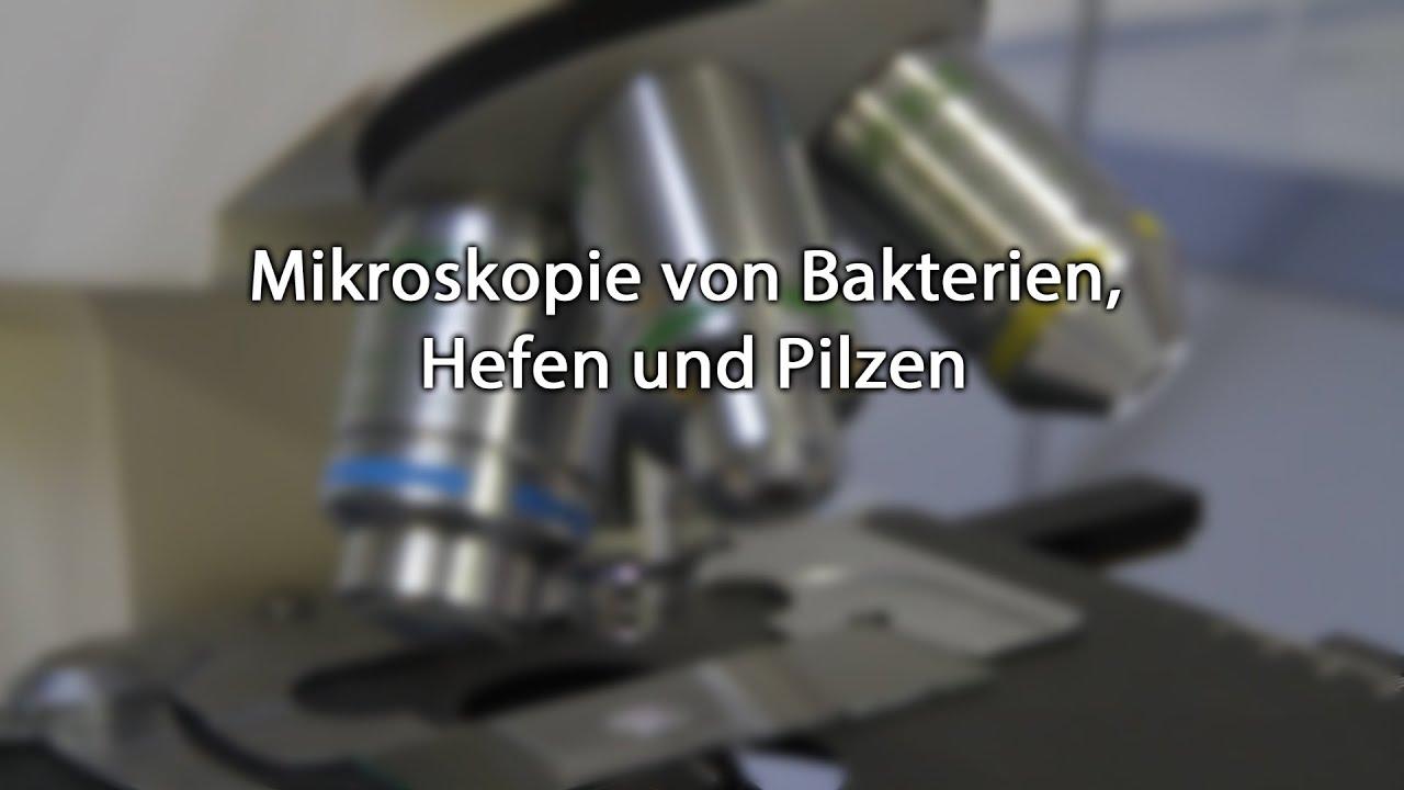 Mikroskopie von bakterien hefen und pilzen