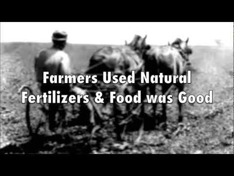Monsanto Video Revolt  - GMO Corn Linked to Organ Failure