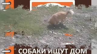Итории 2-х собак Лисичка и Балу / Приют для собак г.Ефремов