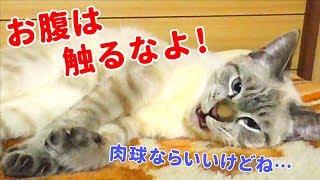 いつもの毛布の上ですごい寝相のデュフィです。 ☆おすすめ動画10選 「田...