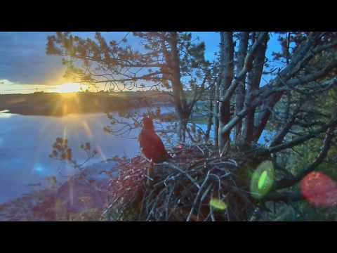 Smola Norway Eagle Nest Cam ~ Solo's Spectacular Sunrise 7.4.17