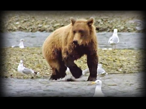 Land of the Giant Bears (full documentary)