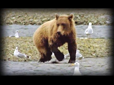 Land of the Giant Bears (full documentary)
