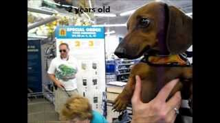 Beemer ADOPTED!! On my way home dachshund rescue
