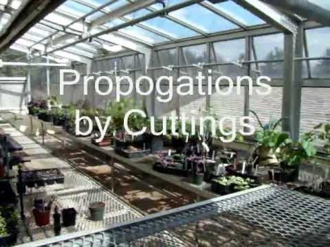 Softwood Plant Propagation By Cuttings Youtube