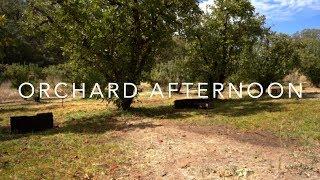 Living Landscape   Orchard Afternoon [4K]