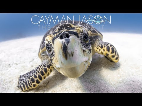 Sea Turtles- My Critically Endangered Friends