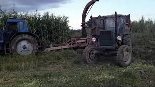 Два МТЗ 82, Т-40 -- Заготовка силоса 2020 по грязи (Часть 1)