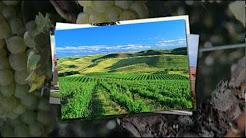 Southern Oregon Wine Institute